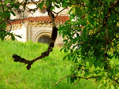verger de la Basilique Ste Marie-Madeleine de Vezelay, par Bertrand Bolognesi